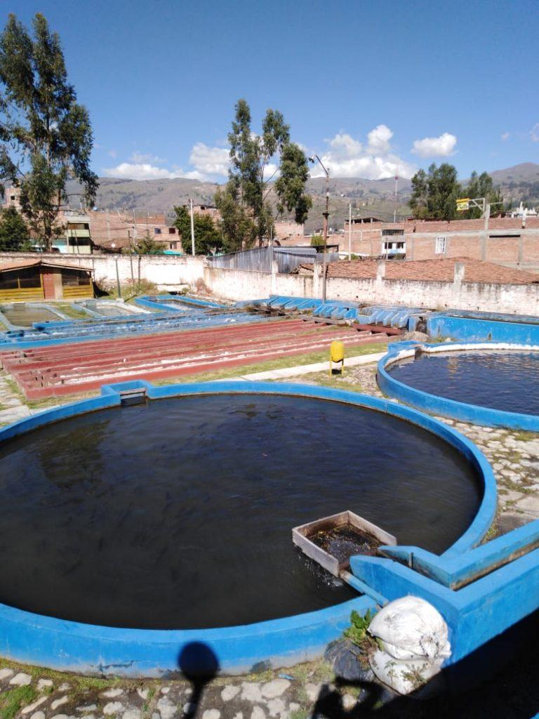 (Español) Visita de investigadores PELCAN a planta de procesamiento de trucha en la ciudad de Huaraz